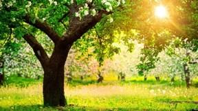 ilkbahar,ağaç,güneş,çimen,doğa