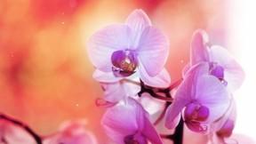 ilkbahar,orkide