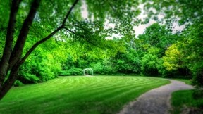 ilkbahar,park,doğa,ağaç,çimen