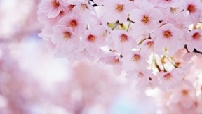 ilkbahar,çiçek