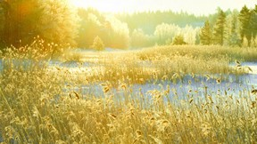 kış,orman,güneş,kar