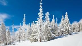 kış,orman,güneş,kar,güneş