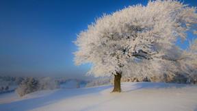 kış,ağaç,kar,gökyüzü