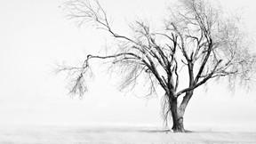kış,kar,ağaç