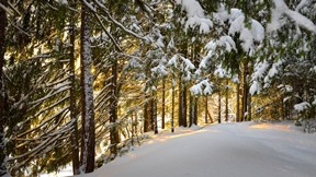 kış,kar,orman