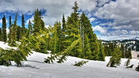 kış,kar,ağaç,çam,güneş