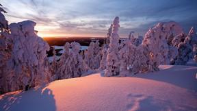 kış,kar,ağaç,güneş
