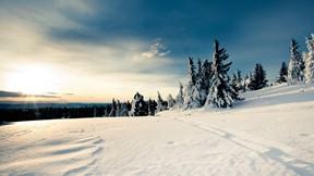 kış,kar,gökyüzü,ağaç