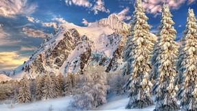 kış,orman,kar,dağ,ağaç