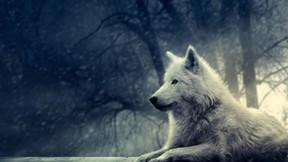 kurt,vahşi,doğa