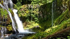 doğa,şelale,orman