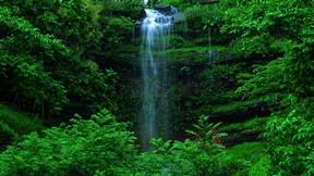 şelale,doğa,orman