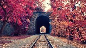 sonbahar,ağaç,tren,tünel,ray,doğa