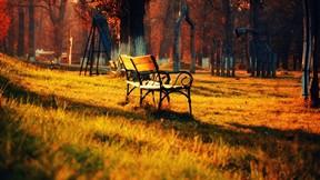 sonbahar,park,ağaç,güneş,bank