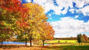 sonbahar,ağaç,manzara,gökyüzü,göl