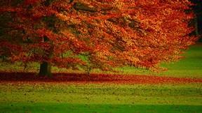 sonbahar,ağaç,yaprak,çimen