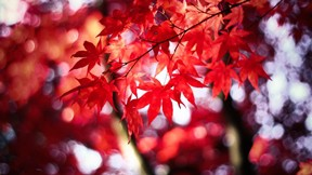 sonbahar,yaprak