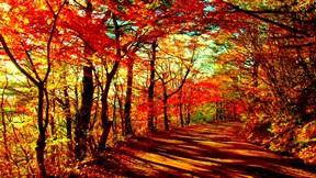 sonbahar,orman,ağaç,yol