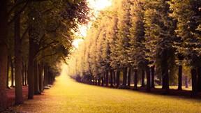 sonbahar,orman,ağaç,çimen