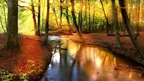 sonbahar,orman,akarsu,güneş,ağaç