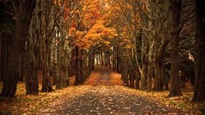 sonbahar,orman,yol