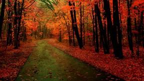 sonbahar,orman,yaprak,yol