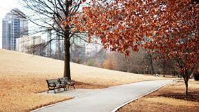 sonbahar,park,ağaç