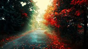 sonbahar,ağaç,yol