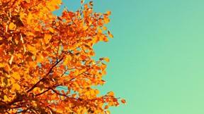 sonbahar,gökyüzü,yaprak