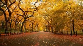 sonbahar,ağaç,park