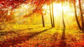 sonbahar,ağaç,orman,güneş