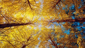 sonbahar,ağaç,gökyüzü