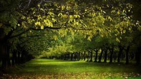 sonbahar,orman,doğa,ağaç