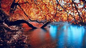 sonbahar,ağaç,göl,yaprak