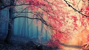 sonbahar,orman,ağaç,yaprak