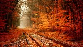 sonbahar,tren,ağaç,yaprak