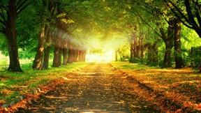 sonbahar,günbatımı,güneş,ağaç,yol
