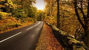 sonbahar,yol,ağaç