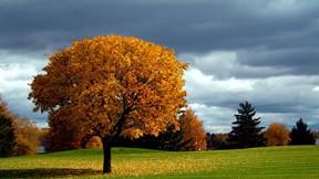 sonbahar,ağaç,gökyüzü,çimen,doğa