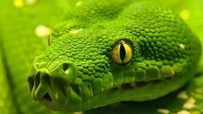 yılan,makro,göz