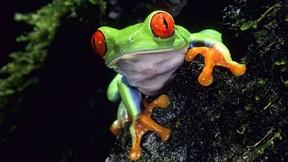 kurbağa,ağaç,göz,makro