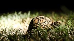 kaplumbağa,çimen,güneş
