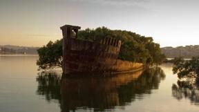 yüzen orman,deniz,gemi