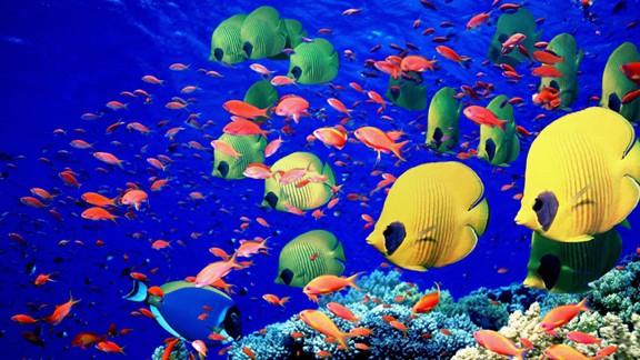 Tropikal Balıklar