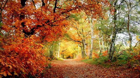 Doğal Park