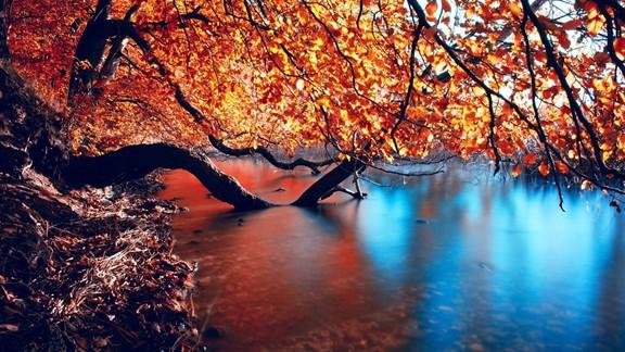 Göl Üzerinde Ağaç Dalları