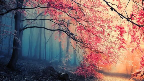 Pembe Yapraklar