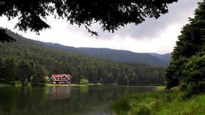 abant gölü,bolu,göl,orman,ağaç