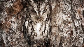 baykuş,ağaç