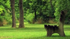 ilkbahar,bank,doğa,çimen,ağaç